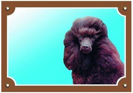 Farebná ceduľka Pozor pes Pudel hnedý