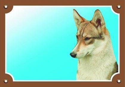Farebná ceduľka Pozor pes Západosibírska lajka
