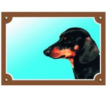 Farebná ceduľka Pozor pes Jazvečík hladkosrstý čierny
