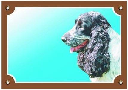 Farebná ceduľka Pozor pes Anglický koker čb