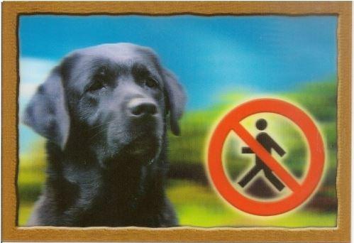 Ceduľka 3D Pozor pes Labradorský retríver (čierny)