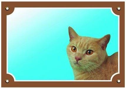 Farebná ceduľka Pozor pes Mačka
