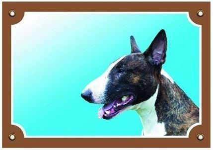 Farebná ceduľka Pozor pes bullteriér pes