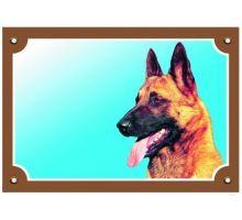 Farebná ceduľka Pozor pes Belgický ovčiak