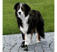 Ochranné topánky WALKER ACTIVE M 2 ks (border kólia)