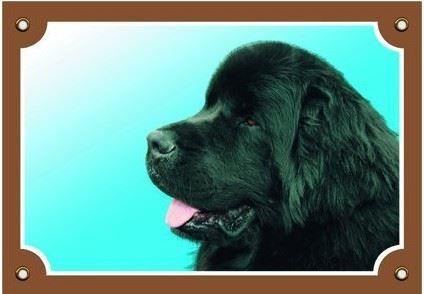 Farebná ceduľka Pozor pes Novofundlanský pes čierny