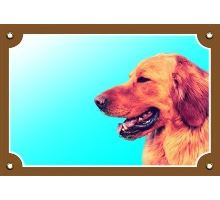 Farebná ceduľka Pozor pes Hovaward