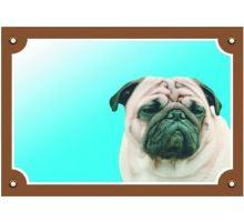 Farebná ceduľka Pozor pes Mops VÝPREDAJ