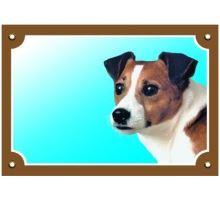 Farebná ceduľka Pozor pes Jack Russel terier
