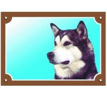 Farebná ceduľka Pozor pes Malamut