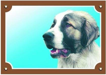 Farebná ceduľka Pozor pes Kaukazský ovčiak