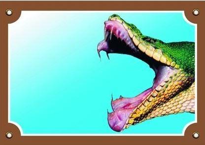 Farebná ceduľka Tu bývam ja! Had papuľa