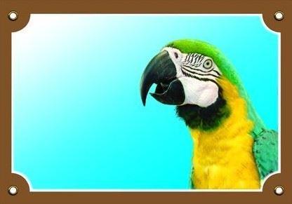 Farebná ceduľka Tu bývam ja! Papagáj ara ararauna