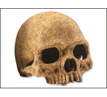 Dekorácie EXO TERRA ľudská lebka 1ks