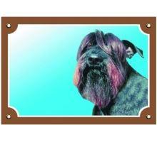 Farebná ceduľka Pozor pes Bradáč čierny