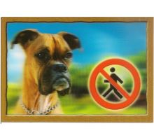 Ceduľka 3D Pozor pes Boxer