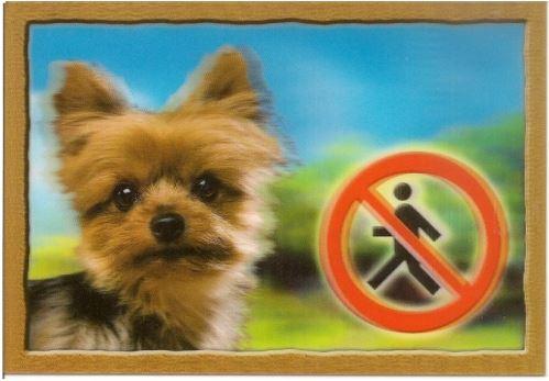 Ceduľka 3D Pozor pes Yorkshire terier