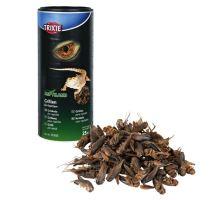 Sušený cvrček 250 ml / 25 g
