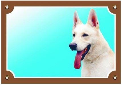 Farebná ceduľka Pozor pes Kanadsko-americký ovčiak VÝPREDAJ
