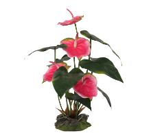 Lucky Reptile Anthurium - růžové cca 50 cm
