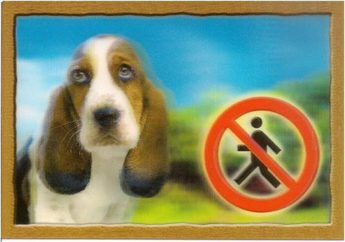 Ceduľka 3D Pozor pes Baset