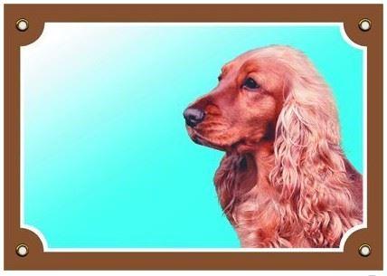 Farebná ceduľka Pozor pes Anglický koker zlatý