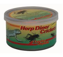 Lucky Reptile Herp Diner cvrčci 35g - malí