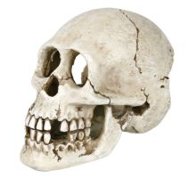 Ľudská lebka 15 cm