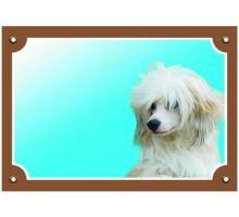 Farebná ceduľka Pozor pes Čínsky chocholatý pes