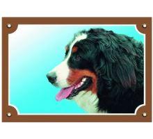 Farebná ceduľka Pozor pes Bernský salašnícky pes