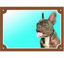Farebná ceduľka Pozor pes Francúzsky buldoček tmavý