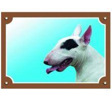 Farebná ceduľka Pozor pes bullteriér fena