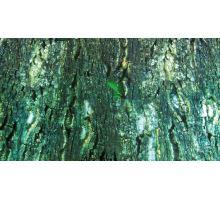 Pozadie do terária, obojstranné KÚRA / dažďové pralesy 60x150 cm