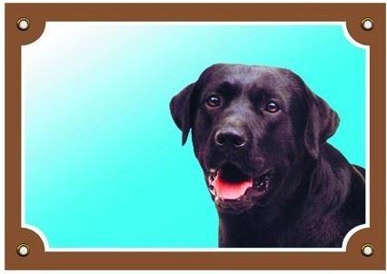 Farebná ceduľka Pozor pes Labrador čierny