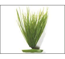 Rastlina Hairgrass 20 cm 1ks