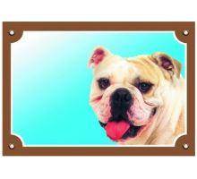 Farebná ceduľka Pozor pes Buldog anglický