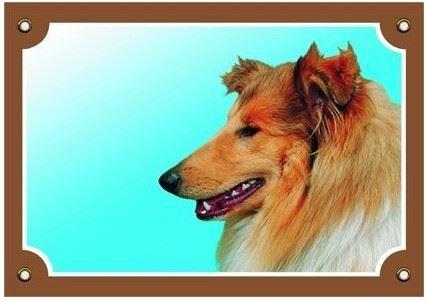 Farebná ceduľka Pozor pes Kólia