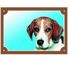 Farebná ceduľka Pozor pes Beagle