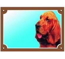 Farebná ceduľka Pozor pes Bloodhound