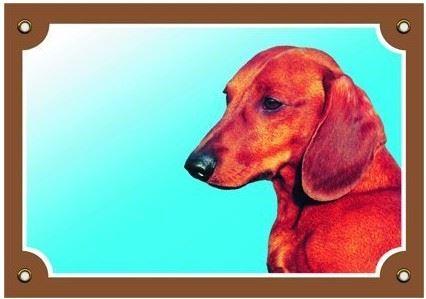Farebná ceduľka Pozor pes Jazvečík hladkosrstý