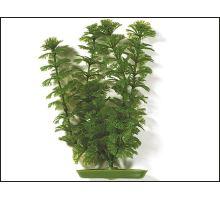 Rastlina Ambulia 20 cm 1ks
