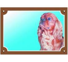Farebná ceduľka Pozor pes Cavalier King Charles