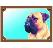 Farebná ceduľka Pozor pes Bullmastif