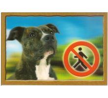 Ceduľka 3D Pozor pes Stafordšírsky terier