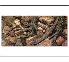 Pozadie AE Root 120 x 50 cm 1ks