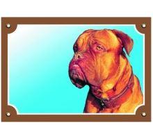 Farebná ceduľka Pozor pes Bordeauxská doga