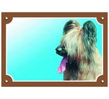 Farebná ceduľka Pozor pes Briard svetlý