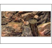 Pozadie AE Root 60 x 30 cm 1ks