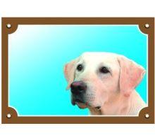 Farebná ceduľka Pozor pes Labrador svetlý