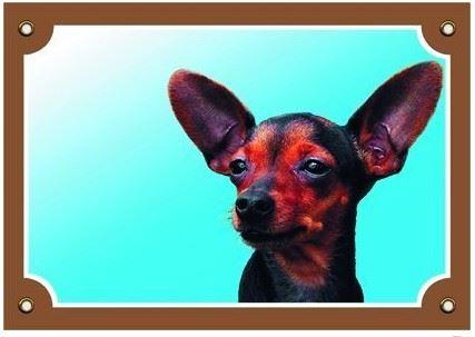 Farebná ceduľka Pozor pes krysařík
